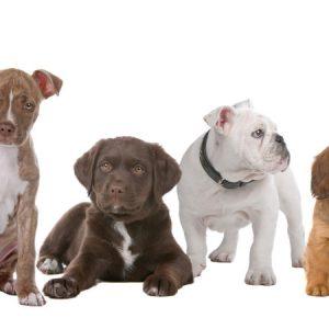 AlphaPet Veterinary Clinics